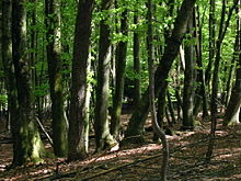Photo of Overstocked Hardwood Forest by Sean McClean